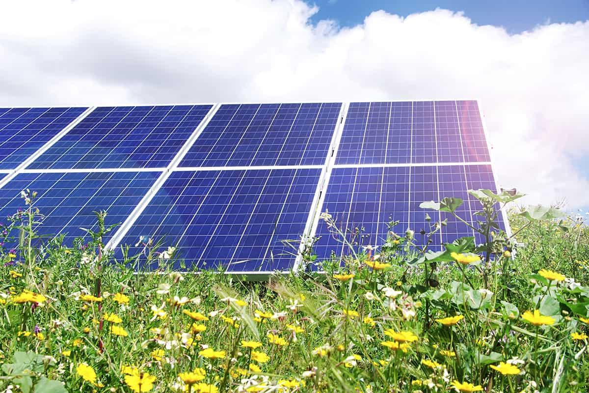 Picture of a solar farm that Bluestem built.