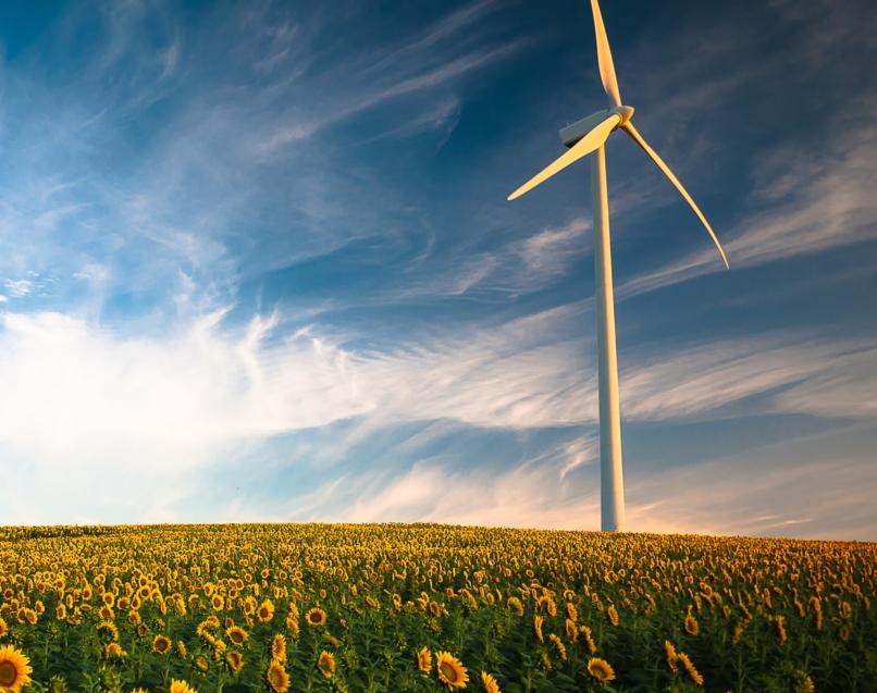 Wind farm in a field of sunflowers.