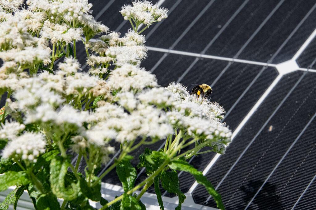 Pollinator-Friendly Solar, Explained