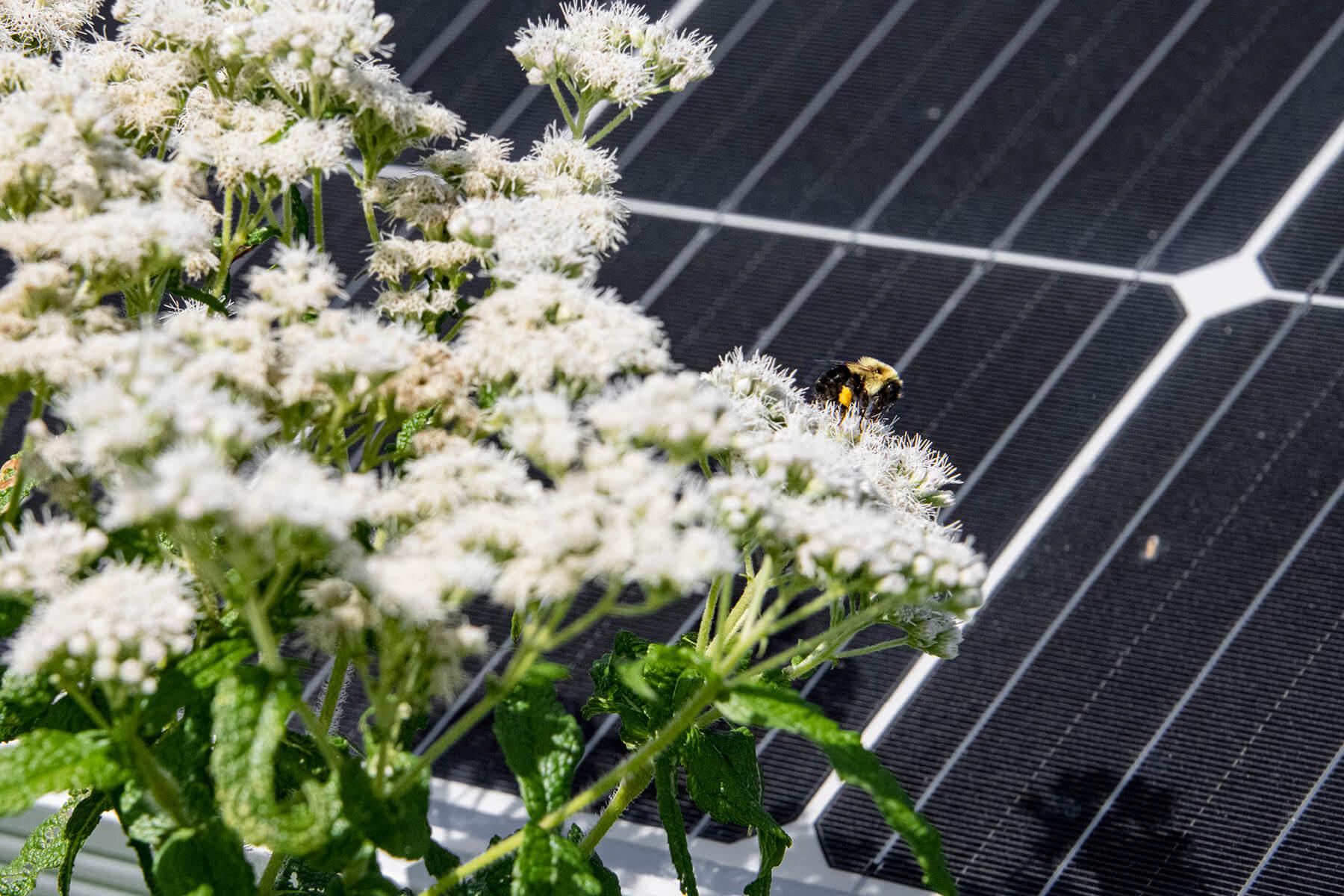 CreditEngieMagee-Hill-Hinesburgh-Vermont-016 Pollinator Solar